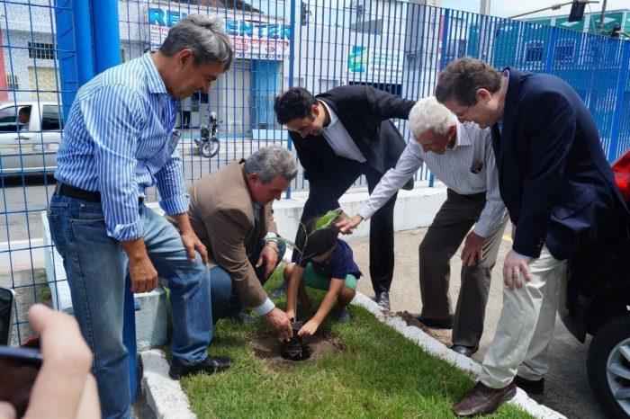 Árvore símbolo de Alagoas será reflorestada em todo estado